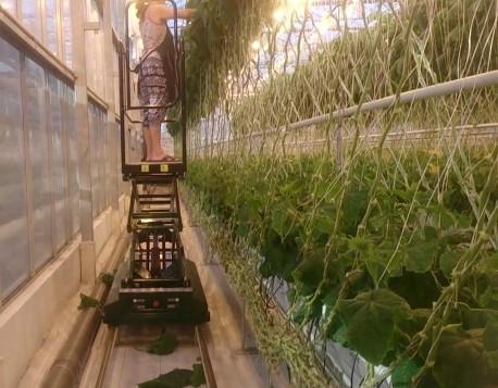 Тележки для растений
